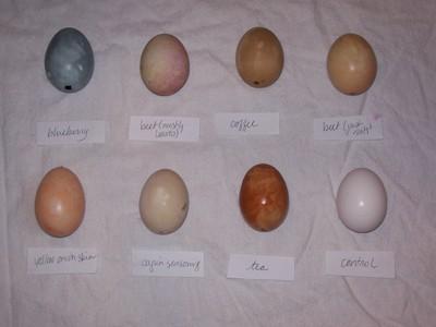 Eggs_flash_2